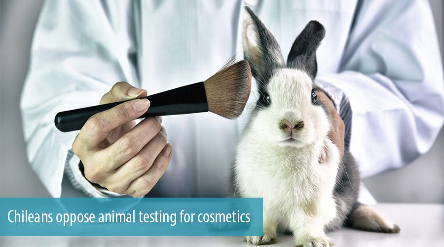 Chileans oppose animal testing for cosmetics