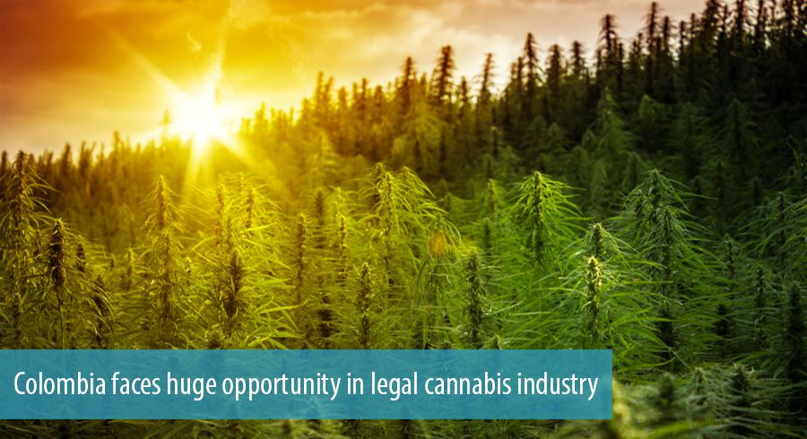 Colombia faces huge opportunity in legal cannabis industry