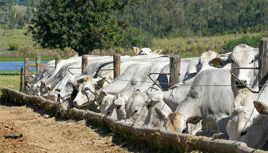 Sustainable cattle farming can be a triple win for Brazil